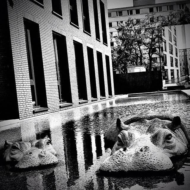 5 - Majklb - Hippo still life