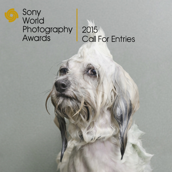 Sony_photography_awards_butterboom1