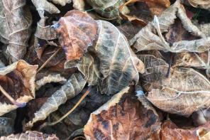 30 skvělých fotografií podzimu, inspirace pro naší soutěž Mr. Fotostream