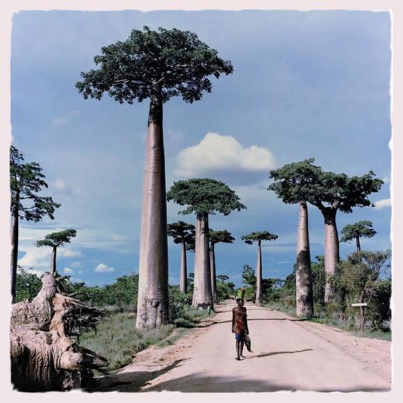 Madagascar-HipstaPak 1