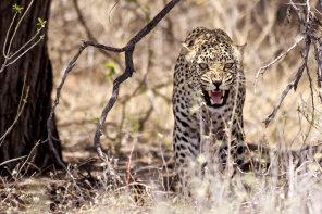 Namíbie vás dostane nádhernou divokou přírodou!