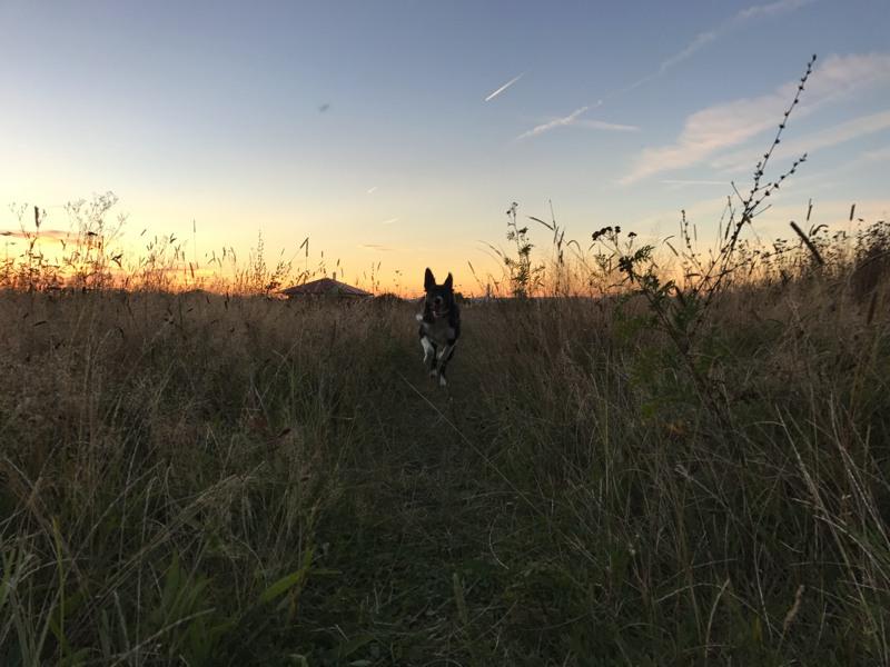 I za zhoršených světelných podmínek je fotografie ucházející, i když je běžící pes trochu rozmazaný.